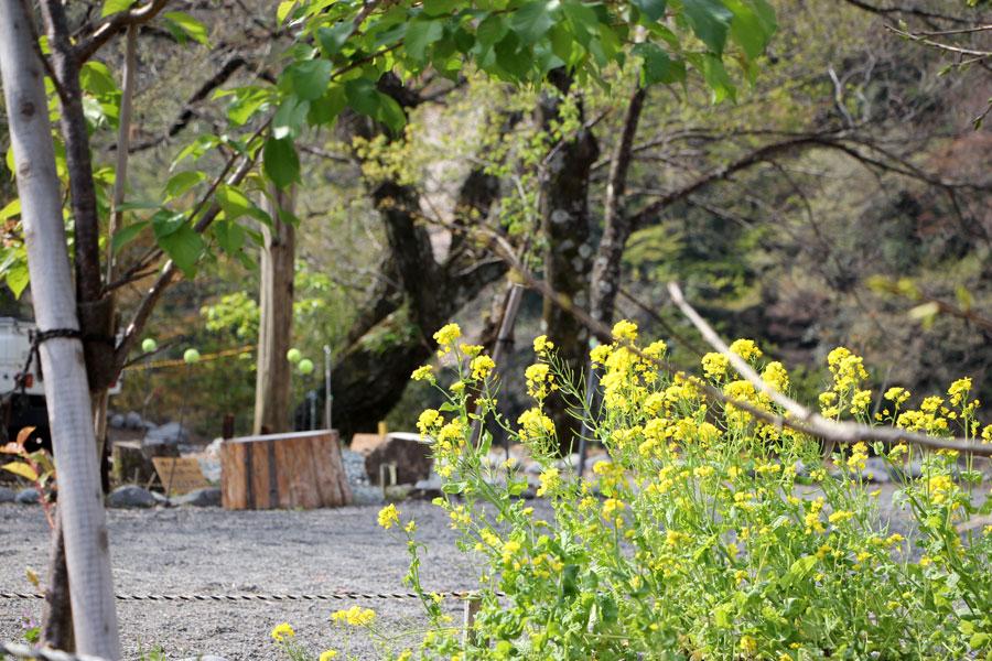 いにしえの杜 鉄橋の杜キャンプ場